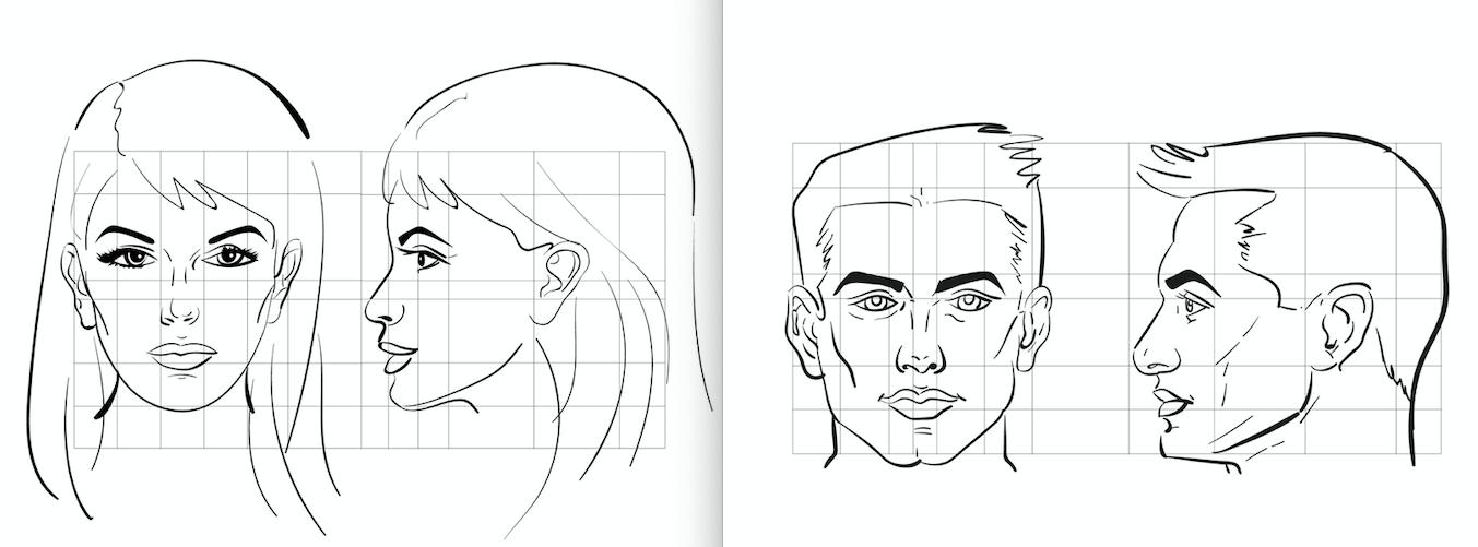 Comparación entre la frente femenina y la frente masculina